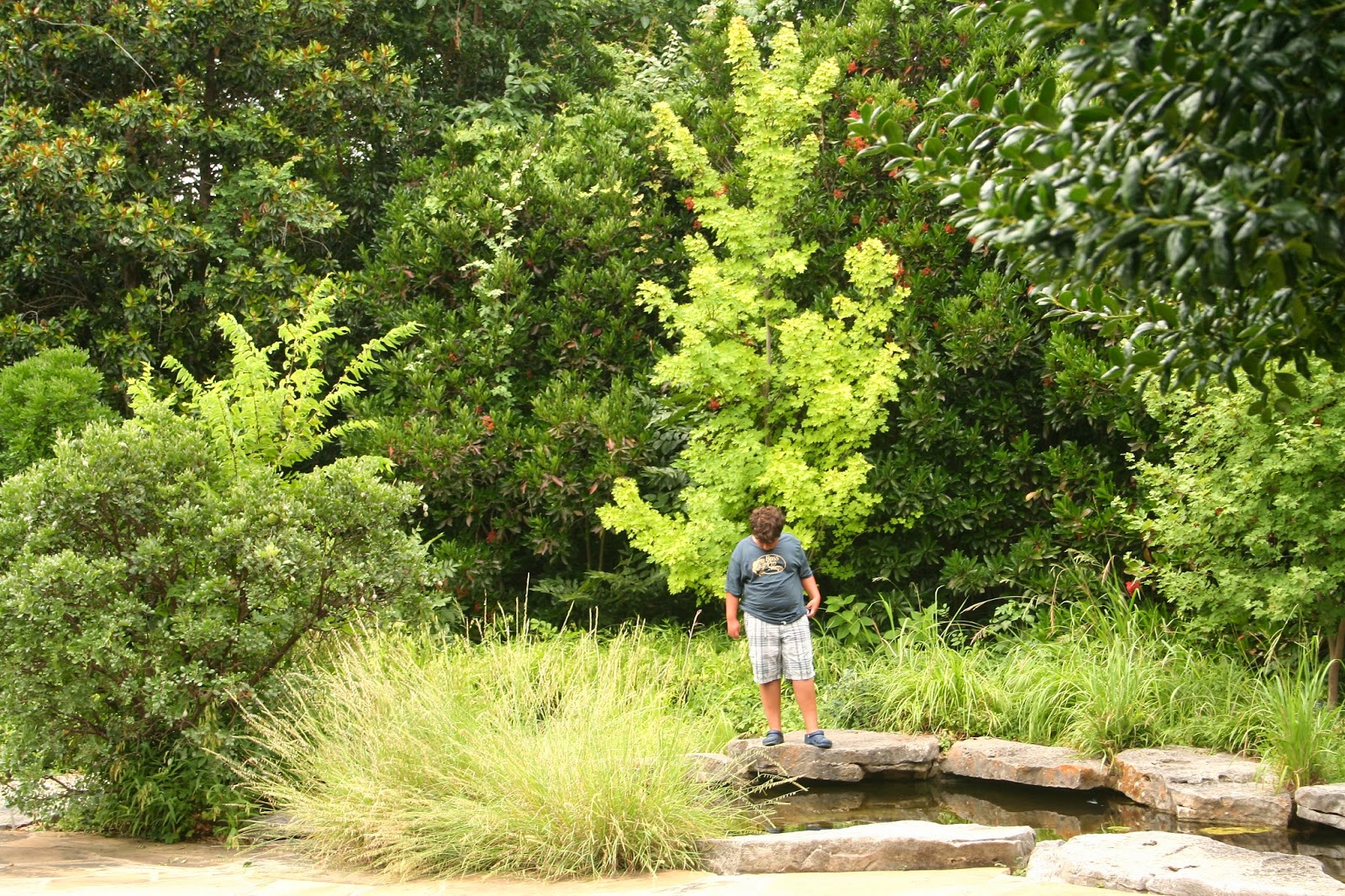 Meanderings Texas Fort Worth Botanical Gardens