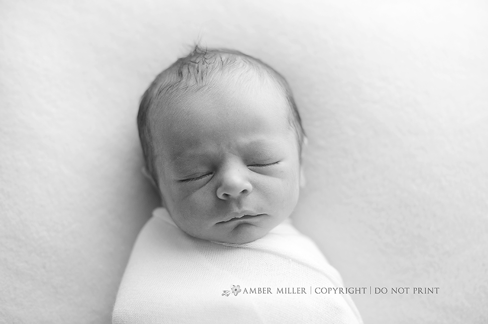 utah newborn portrait photographer