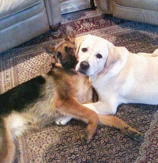 2 Hunde Umarmung