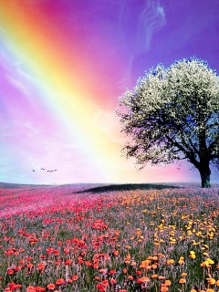 Nature Wallpapers For Samsung Galaxy Y