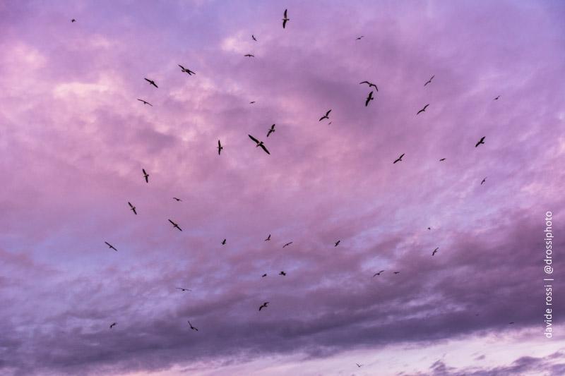 Freedom - gabbiani nei cieli di Roma