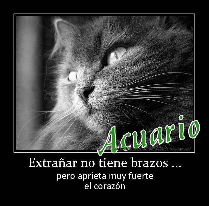 Miss You, Tiene Brazos, Mi Signo, In Castilian, World, Super