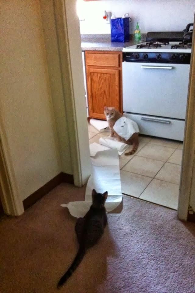 Кот и туалетная бумага - 2