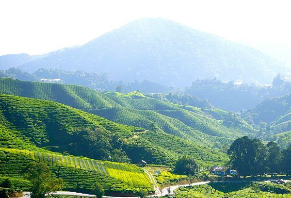 Blick über Hügel und Teeplantagen der Cameron Highlands