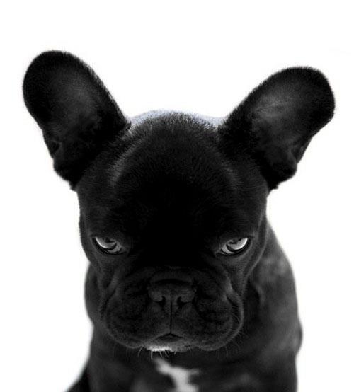 imagens para facebook animais