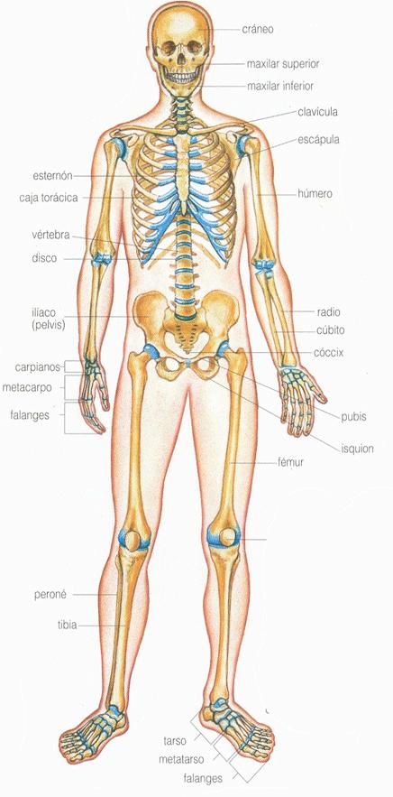Imagenes para imprimir del cuerpo humano
