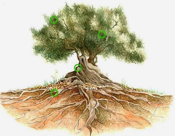 L'arbre aux questions: Mon mont des oliviers
