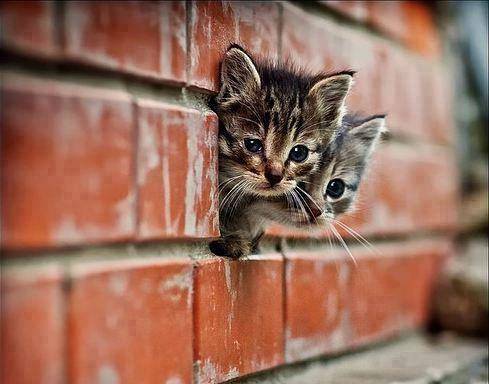 Cute Kittens Hidding behind the wall