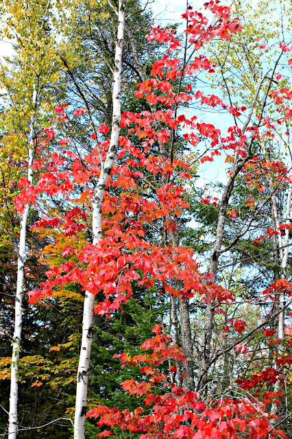 fall leaf peeping drive in the Adirondack Mountains of Upstate NY - www.goldenboysandme.com