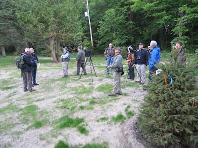 Birders in clearing in Gatineau Park