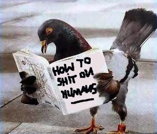 gambar burung merpati lucu