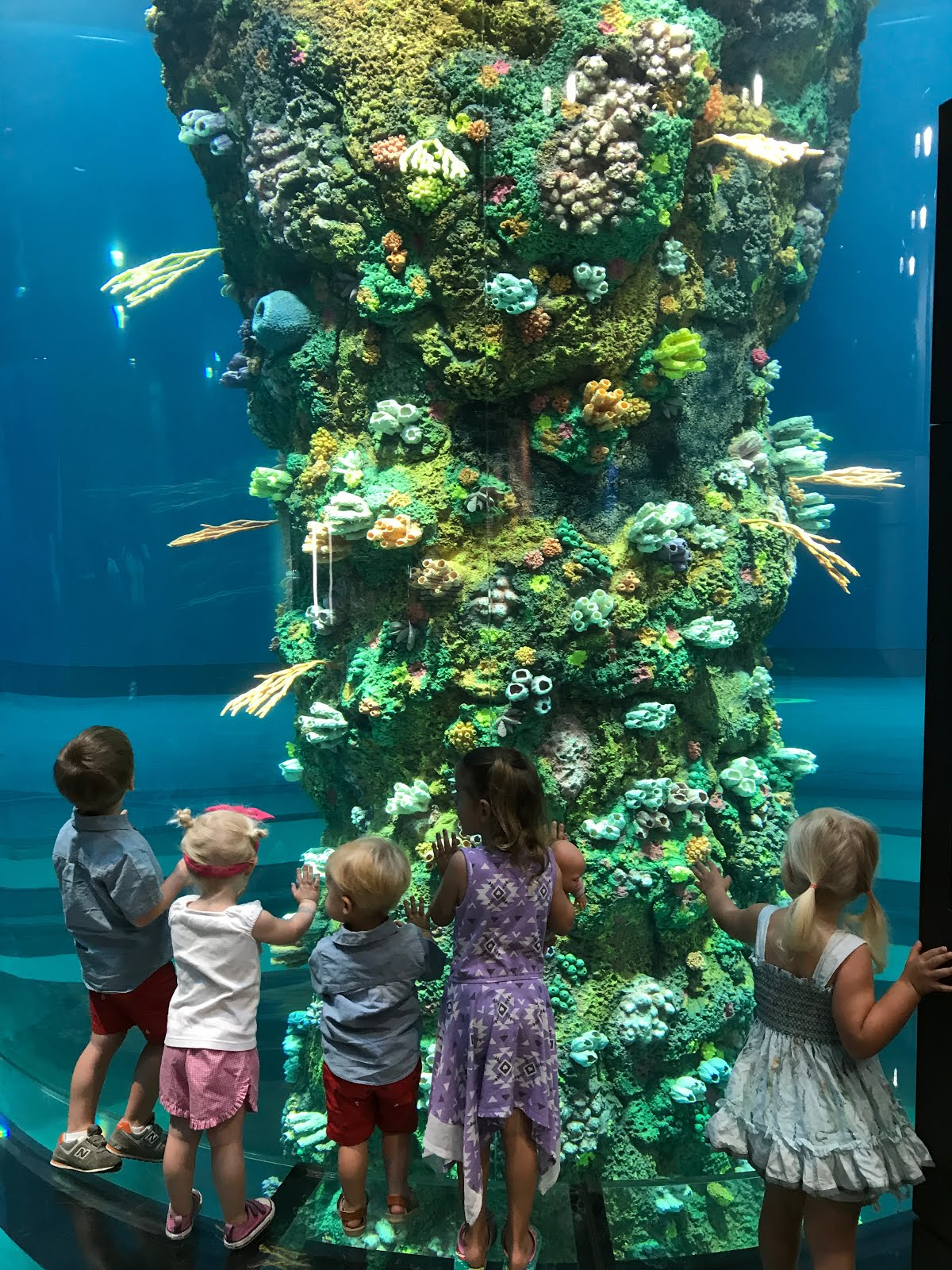 A New Aquarium That Runs From Top To Bottom! The Kids Noticed This First!