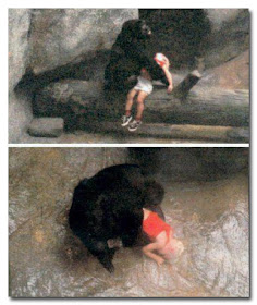 Gorilla Selamatkan Bayi berusia 3 Tahun - www.jurukunci.net