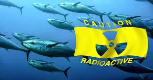 Detectan cesio radiactivo fuera del puerto de la central de Fukushima, 22 de Octubre 2013