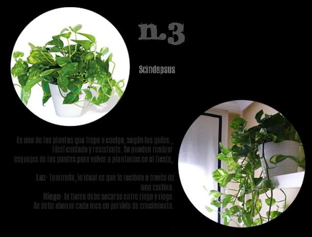 3 plantas resistentes en casa todo el a o decoraci n - Home personal shopper ...