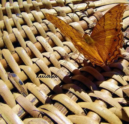 butterfly on a hammock, the letters in november