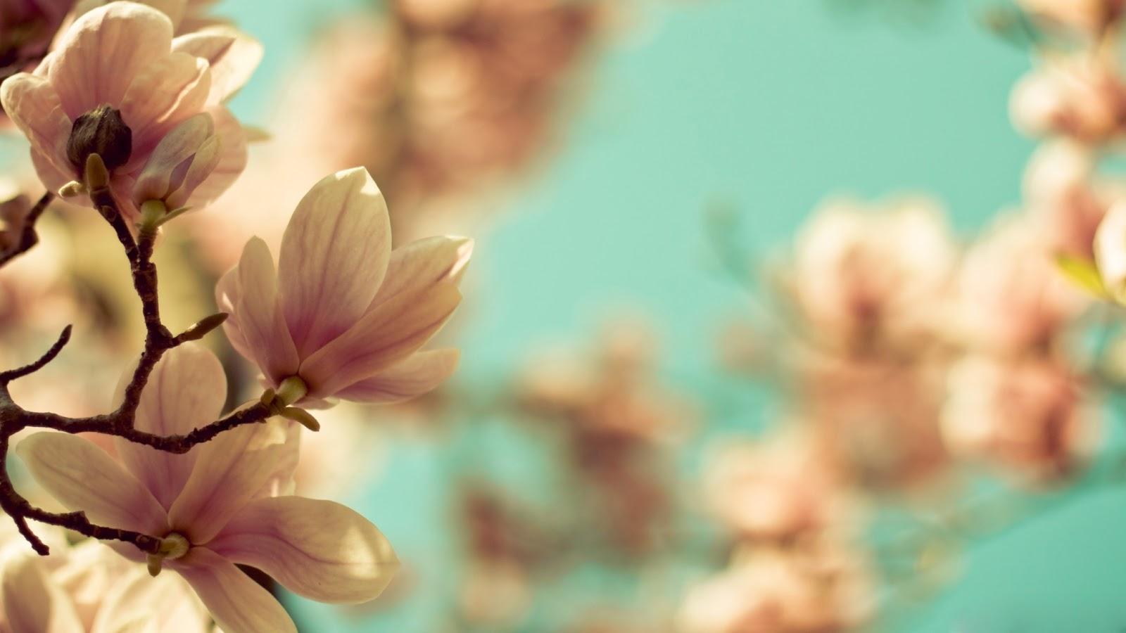 hinh-nen-hd-dep-cho-may-tinh-hoa-mai-hong-small_green_flowers-wallpaper-2560x1440