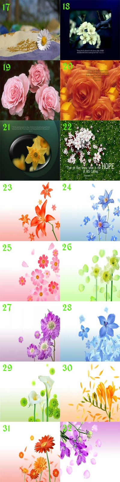 gambar cantik wallpaper bunga