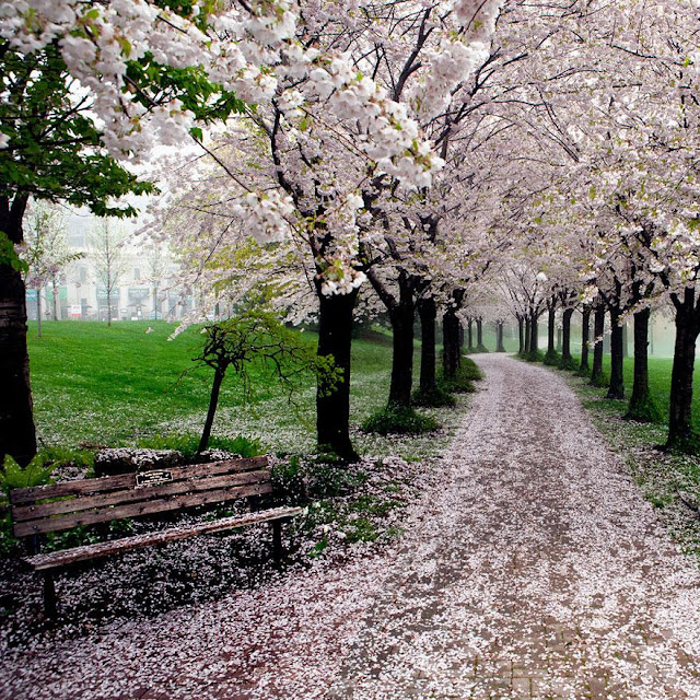 Footpath Beautiful Wallpapers