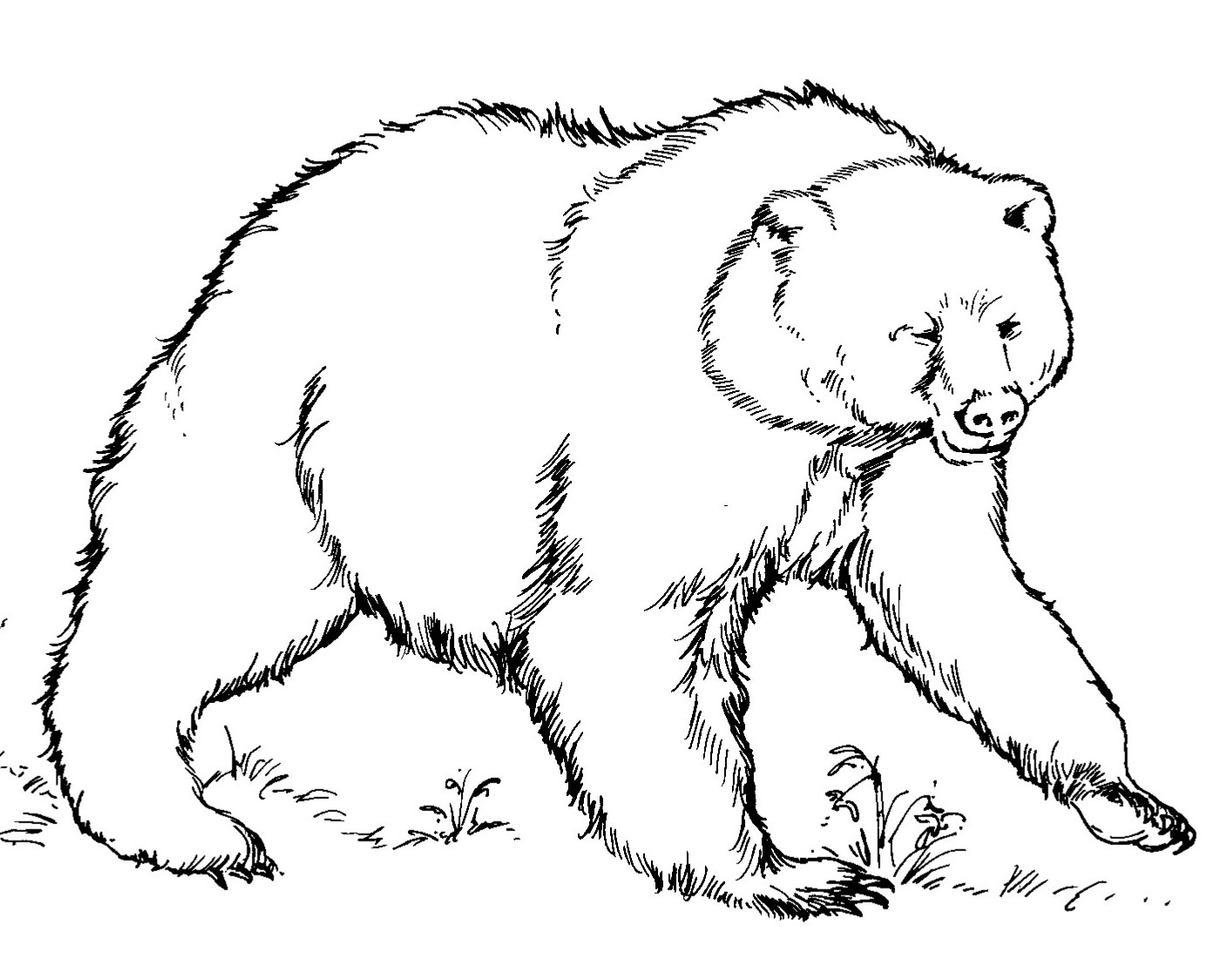 Contoh lukisan hitam putih untuk di warnai bagi anak tk dan pra