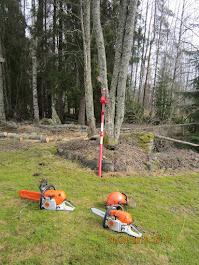Pihapuiden kaadot Stalpen kaadonsuuntaaja apuna käteisellä Tampere Pirkanmaa. Kotitalousvähennys