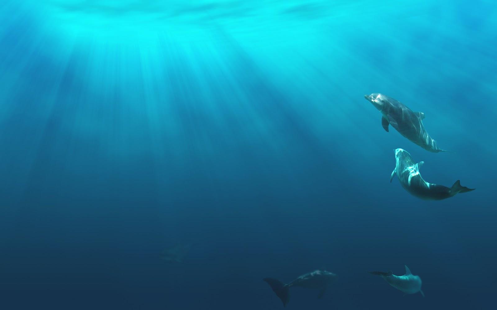 200 <b>Dolphin</b> HD <b>Wallpapers</b> | Backgrounds - <b>Wallpaper</b> Abyss