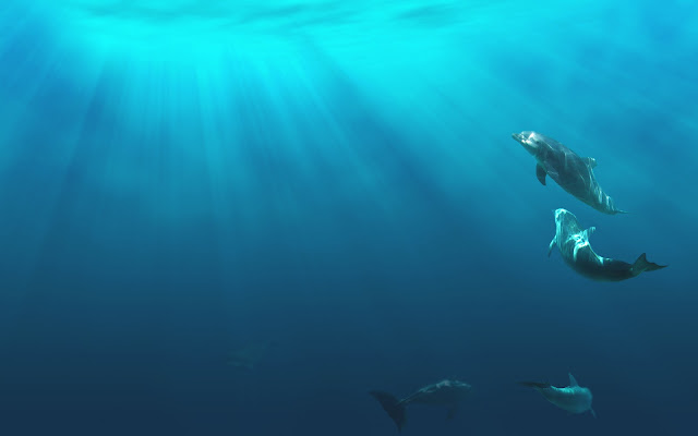Photo of a a group of dolphins in the deep blue sea