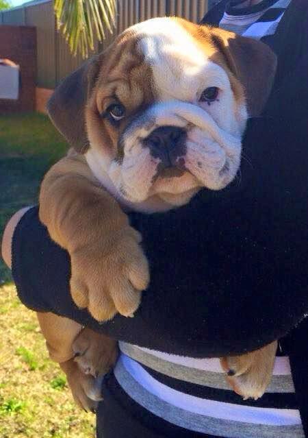 Top 5 Stinkiest Dog Breeds