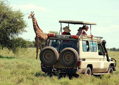 Safari - que visitar