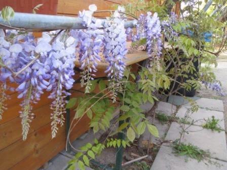 giftige und ungiftige pflanzen im garten und auf dem balkon eltern baby kind und mehr. Black Bedroom Furniture Sets. Home Design Ideas