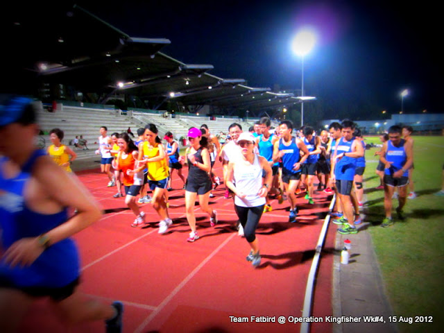 Kingfisher Week #4: Evening Track Delight