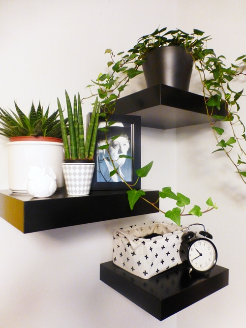 Plants Pflanzen Deko Dekoration Miss Marple