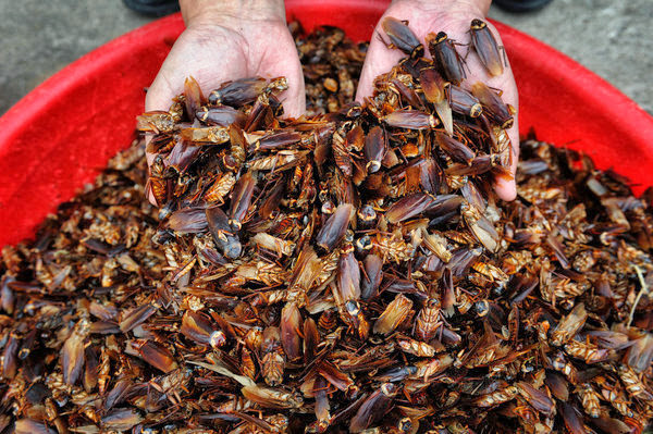 Cockroach Farming is a Booming Business in China