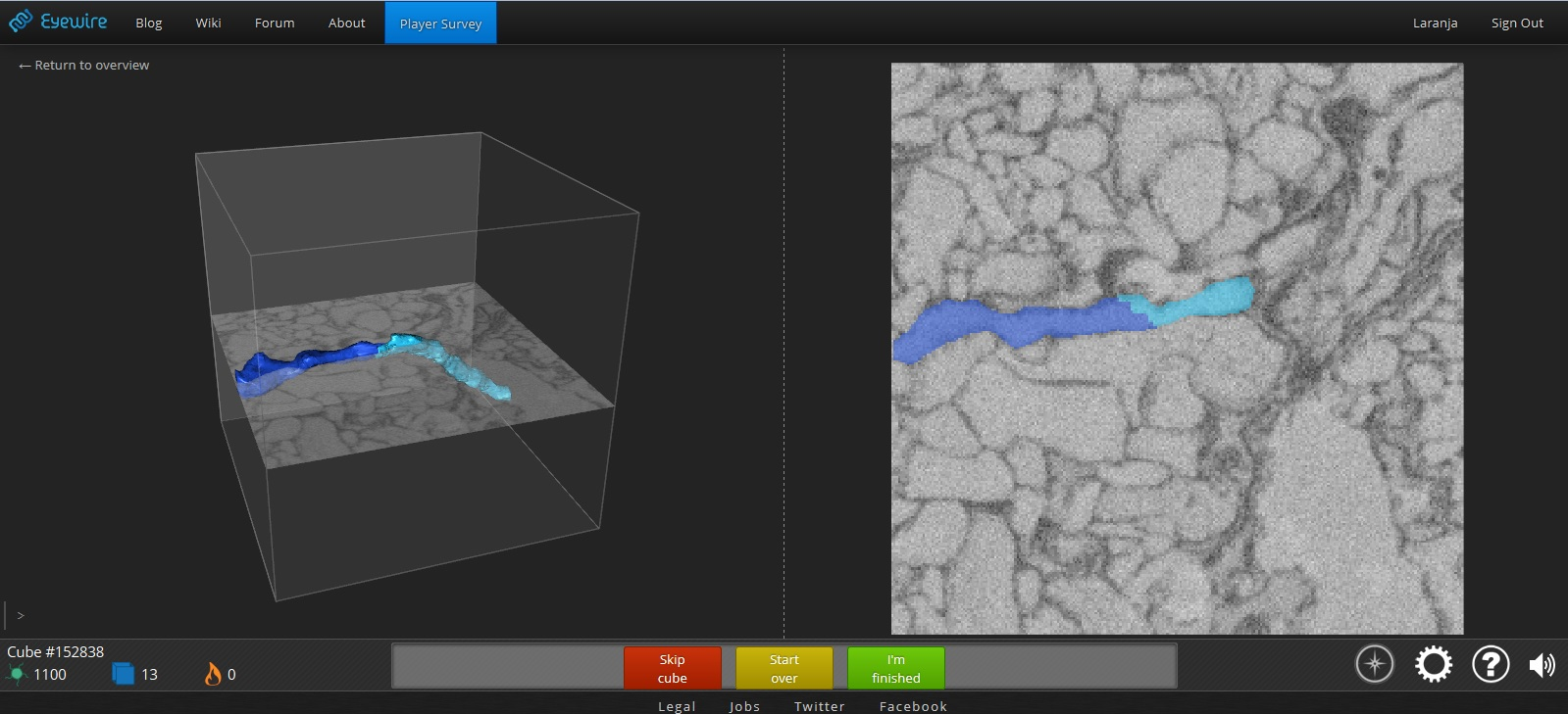 Eyewire neuron mapping game