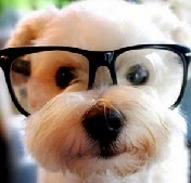 Dog quotes, cute dog with glasses