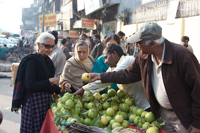 picking out guava in Delhi