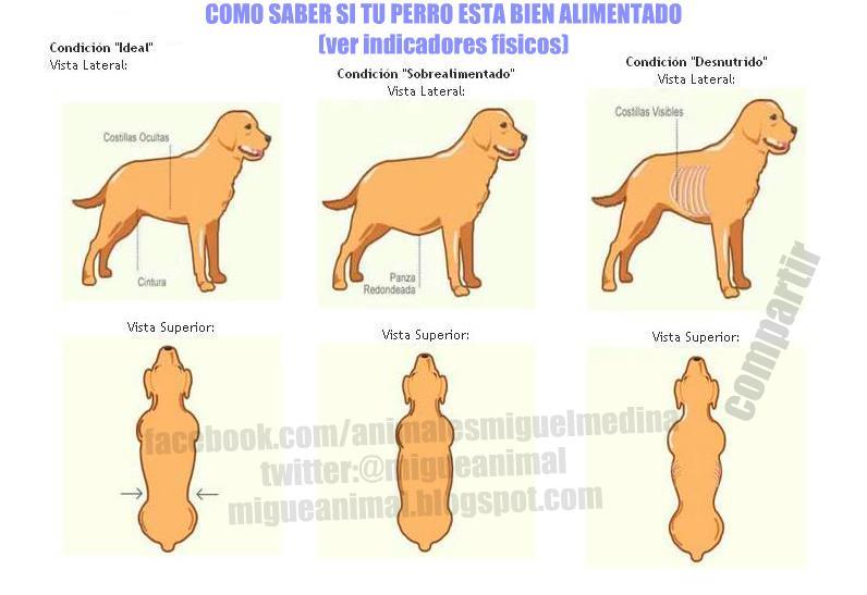 Miguel medina blog como saber si tu perro esta bien for Como saber si es marmol
