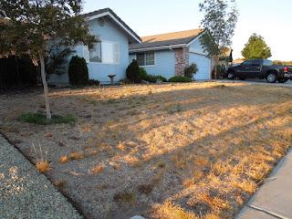 Brown Lawn in Paso Robles, © B. Radisavljevic