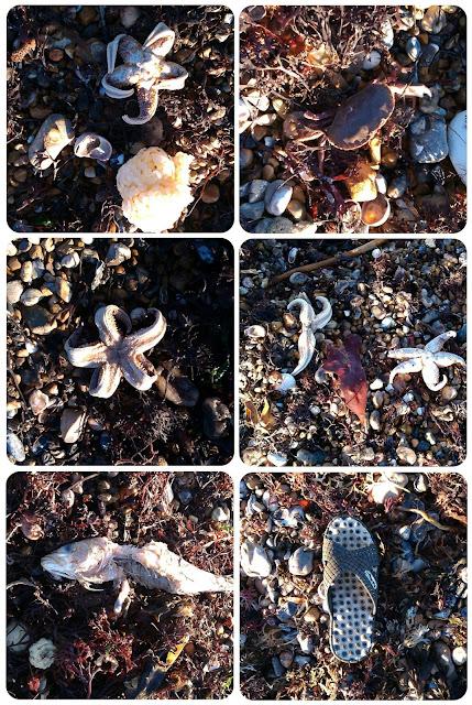 Marine storm debris, Worthing