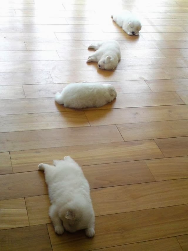 Cute dogs - part 7 (50 pics), four puppies sleeping
