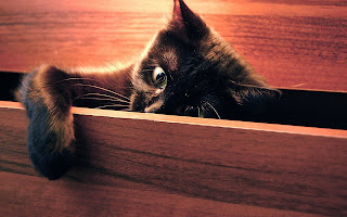 Funny Cat In The Closet HD Wallpaper