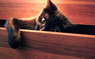 Funny Cat In The Closet HD Wallpaper