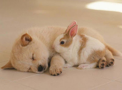 _cute rabbitwith dog Puppy HQ wallpapers