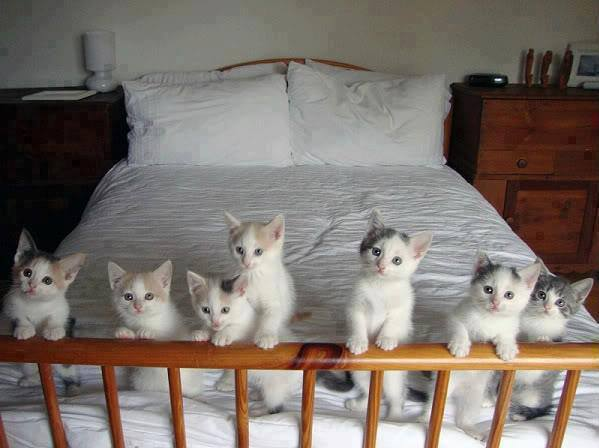 Little adorable kittens standing on a bed
