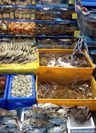 Marisco coreano vivo en acuarios con agua