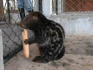 ANIMALES SILVESTRES WEBQUEST