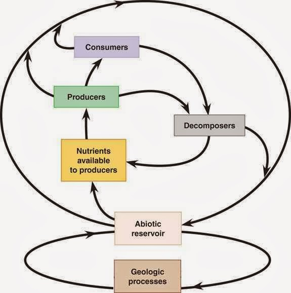 Biogeochemical Cycles  Nutrient Cycles    ppt download Kullabs