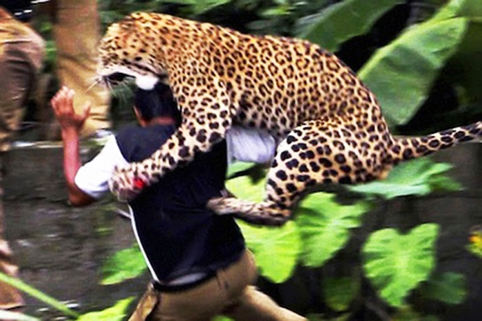 Animals attacking perfectly in time