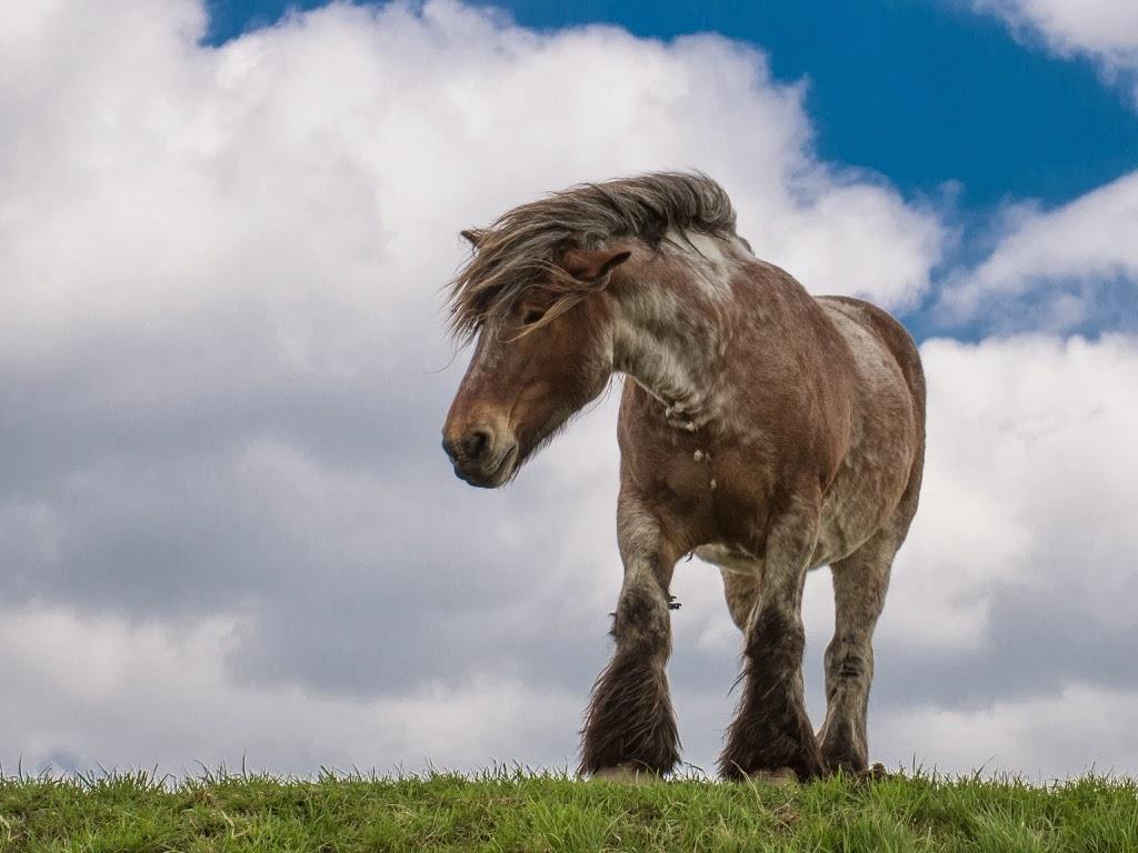 """<img src=""""http://4.bp.blogspot.com/-AjA0vwHhX5M/UtkTz8CePbI/AAAAAAAAId4/Y0Rc_TDVP1A/s1600/animal-wallpapers-draft-horse.jpeg"""" alt=""""draft horse"""" />"""