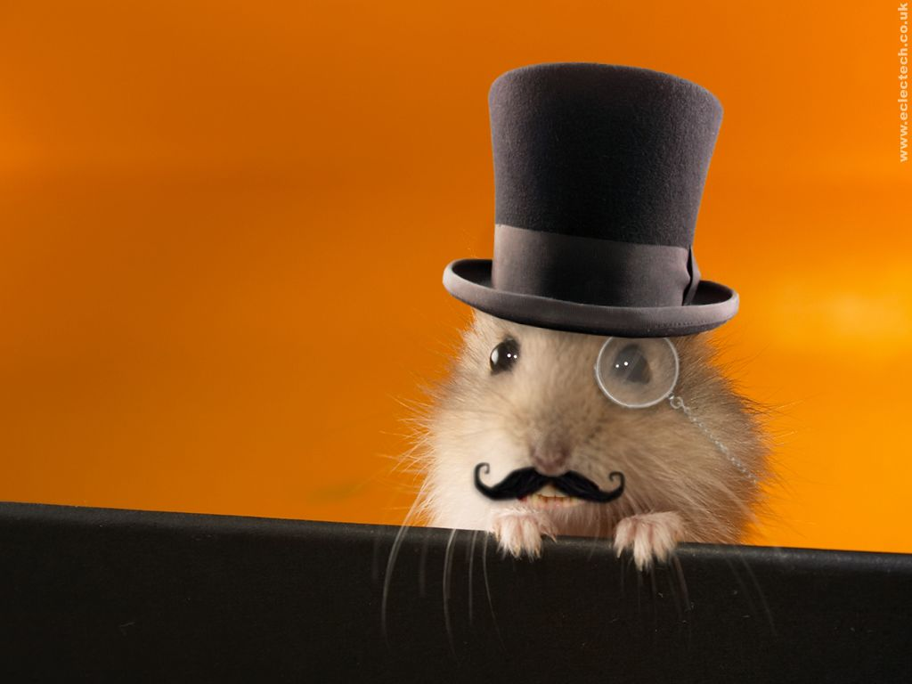 funny hamsters wallpaper funny animal